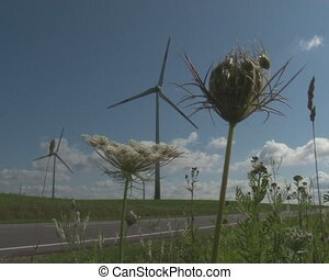 roadside plant windmill - Roadside meadow plants and...
