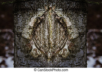 vagina - a birch tree texture with the shape like a woman...