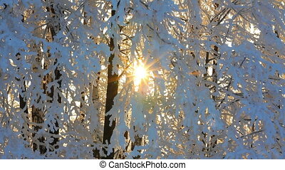 winter frozen birch woods and sun rising