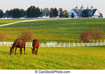 Horses on the Farm - Horses grazing in the pasture at a...