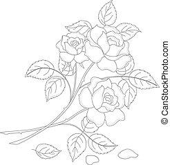 Flowers rose, contour