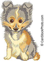 Vector puppy Shetland Sheepdog, Sheltie, Dog breed smile -...