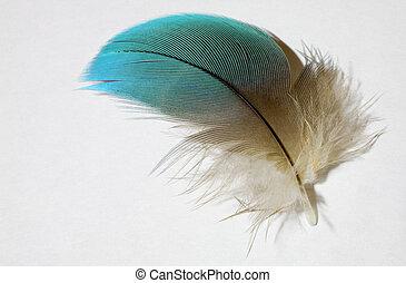 plume, perroquet