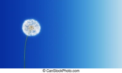 Dandelion Blue Gradient -with Matte - Dandelion on the wind...