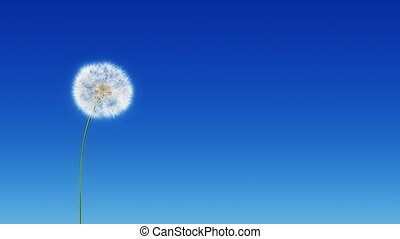 Dandelion Blue Sky (with Matte)