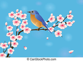 Cherry blossom with robin - Vector illustration of cherry...