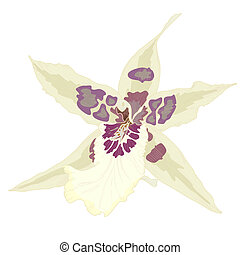 Orchid - Vector illustration with orchid flowers, eps 10...