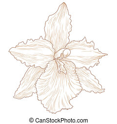 Orchid - Vector illustration with orchid flowers in...