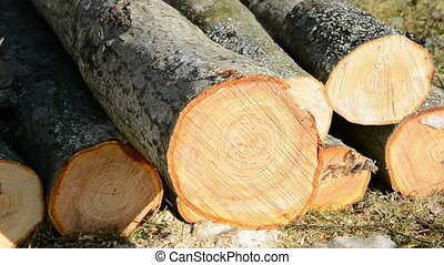 to saw firewood in the yard - to saw firewood in the spring...