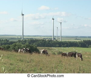 windmill spin cow graze