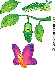 Butterfly Metamorphosis - Vector Illustration Of Butterfly...