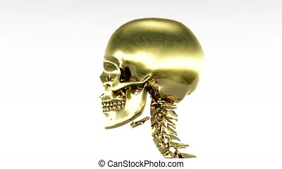 skeleton  - turnning skull