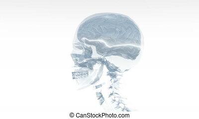 skeleton  - turnning skull