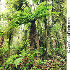 Fern tree - The New Zealand tree fern