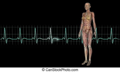 human body - female lay figure and electrocardiogram