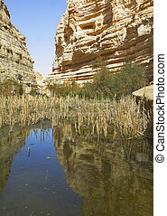 Canyon in desert. - A boggy part of stream En ?vd?? in the...