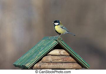 feeding trough for birds