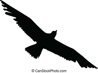 Silhouette of an albatross