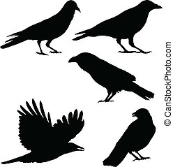 Set of vector images of crows