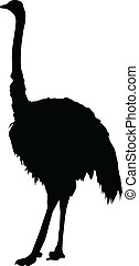 Silhouette of an ostrich