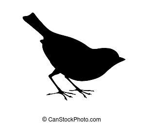 pássaro, silueta, branca, fundo