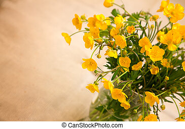 yellow buttercup flowers, with room for text - yellow...