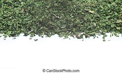 cortado, Culantro,  cilantro, hoja, Plano de fondo, blanco