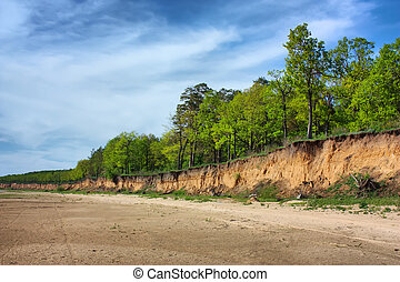 forest  at the edge of the cliff