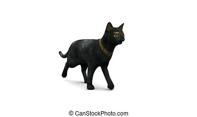 black cat - image of black cat walking