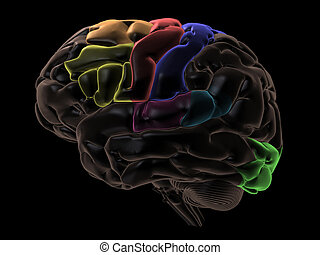 Areas of the Brain, left view - 3D Render. Coloured areas of...
