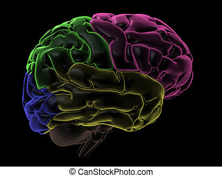 Areas of the Brain, right view - 3D Render. Coloured areas...