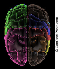 Areas of the Brain, top view - 3D Render. Coloured areas of...