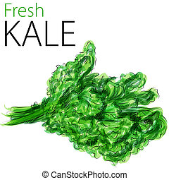 Fresh Kale - An image of a watercolor drawing of fresh kale