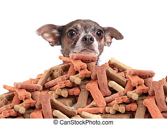 Chihuahua and dog biscuits - Chihuahua peeking over large...