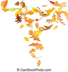 Falling Oak Leaves - Autumn oak leaves falling and spinning...