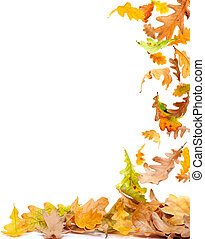Autumn Leaves Frame - Falling autumn oak leaves isolated on...