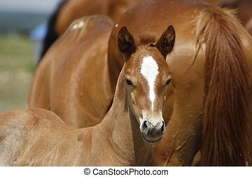 Flashy faced foal