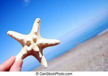 Hand Holding Starfish