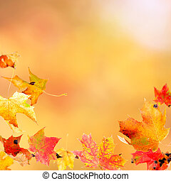Falling Maple Leaves - Falling leaves against the autumn...