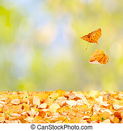Falling Autumn Leaves - Two leaves falling to the ground