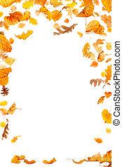 Falling Leaves Frame - Autumn leaves frame on white...