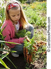 Girl in vegetable garden hold carrots