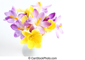 Spring flowers on white background - Spring violet and...
