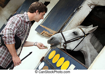 homem, alimentação, cavalo