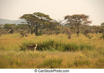 leoa, paisagem