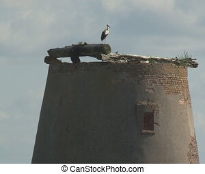 stork ruins building - Stork sits on ruins of old abandoned...