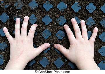 kid hands over a sawn seedbed