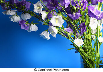 Blue and white bell on blue background. Summer flowers