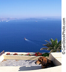 lonely dog - a lonely dog overlooking the caldera at oia on...