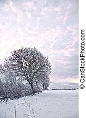 Winter wonderland - Freshly fallen snow lies on the ground...